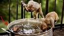 Смешные обезьяны Приколы про обезьян Funny monkeys 3 (Cute And Funny Monkey Videos Compilation)