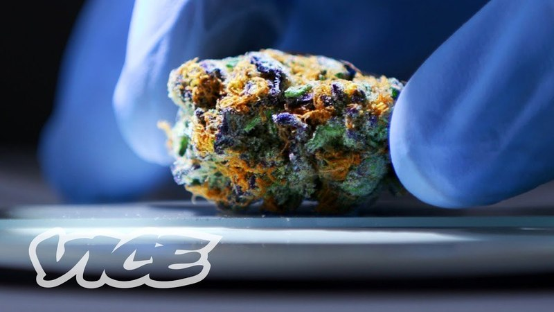 The Lab Making Sure Your Legal Weed Is Safe to Smoke