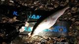 Подводная охота в Ноябре. Щука Карась Лещ