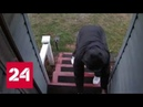 В США судьба наказала похитительницу подарков - Россия 24