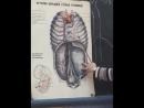 9 позвоночная артерия 1
