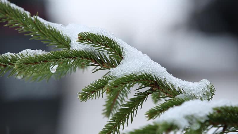 Зима в Истре