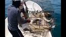 Bẫy bắt cá mú nhiều không đếm xuể fish trap grouper nhật ký đi biển