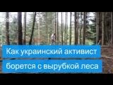 Как в украинских Карпатах борются с вырубкой лесов