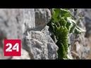 Херсонес Точка отсчета Документальный фильм Аркадия Мамонтова Россия 24