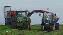80 тонн моркови ежедневно собирают механизаторы Агрофирмы КРиММ