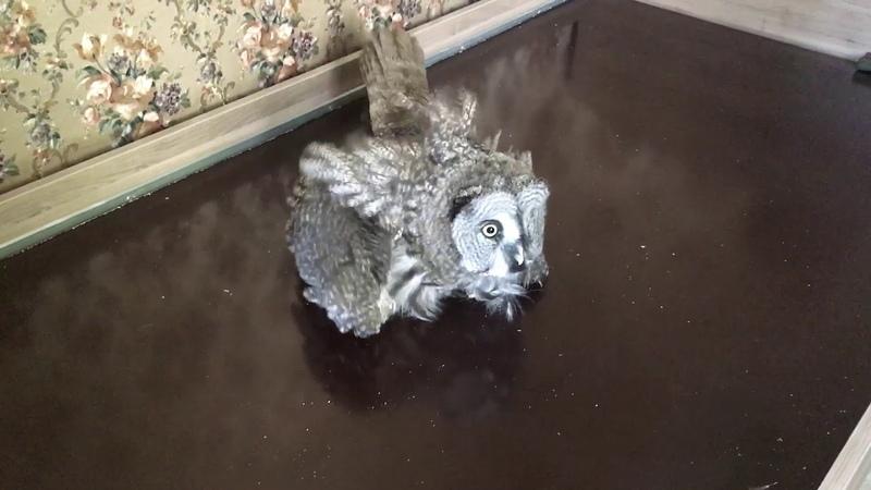 Немножко тупенький совян - 'stupid' owl
