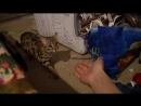 Пока Кати нет_ Арслан vs Бенгальский кот Гуся-spian--scscscrp