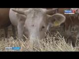 Рост надоев молока зафиксировали в Саратовской области