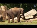 Слоненка разбудили