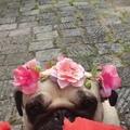 helena_muzyka video