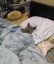 Нужно набраться смелости и всё-таки pассказать коту, что это он живёт у меня, а не я у него.