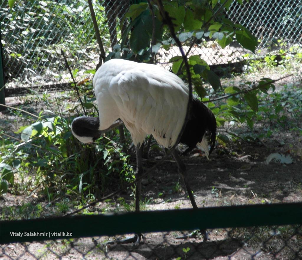 Аист в зоопарке Алматы 2018