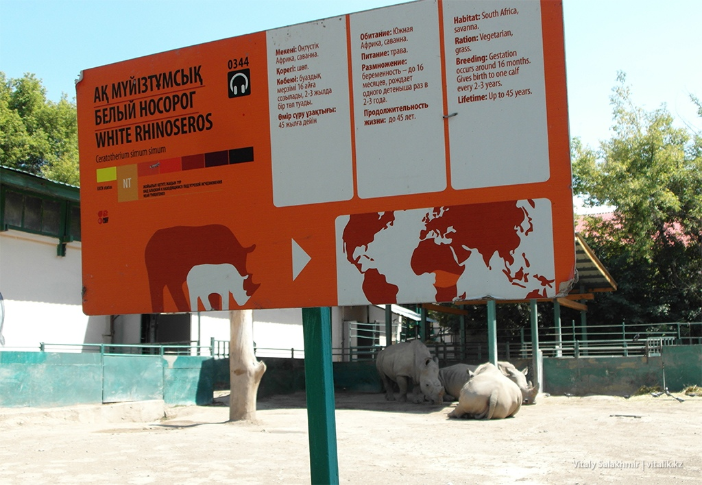 Белый носорог, зоопарк Алматы 2018
