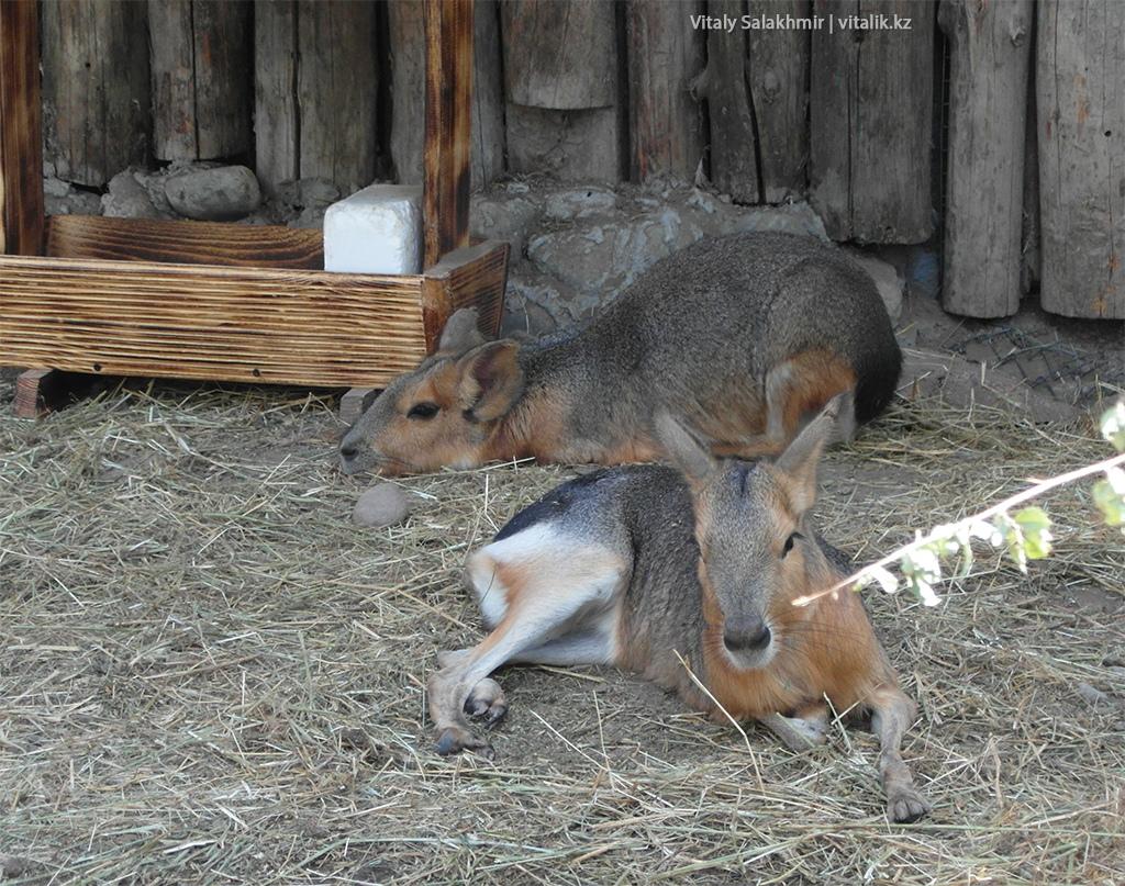 Животные зоопарка Алматы 2018