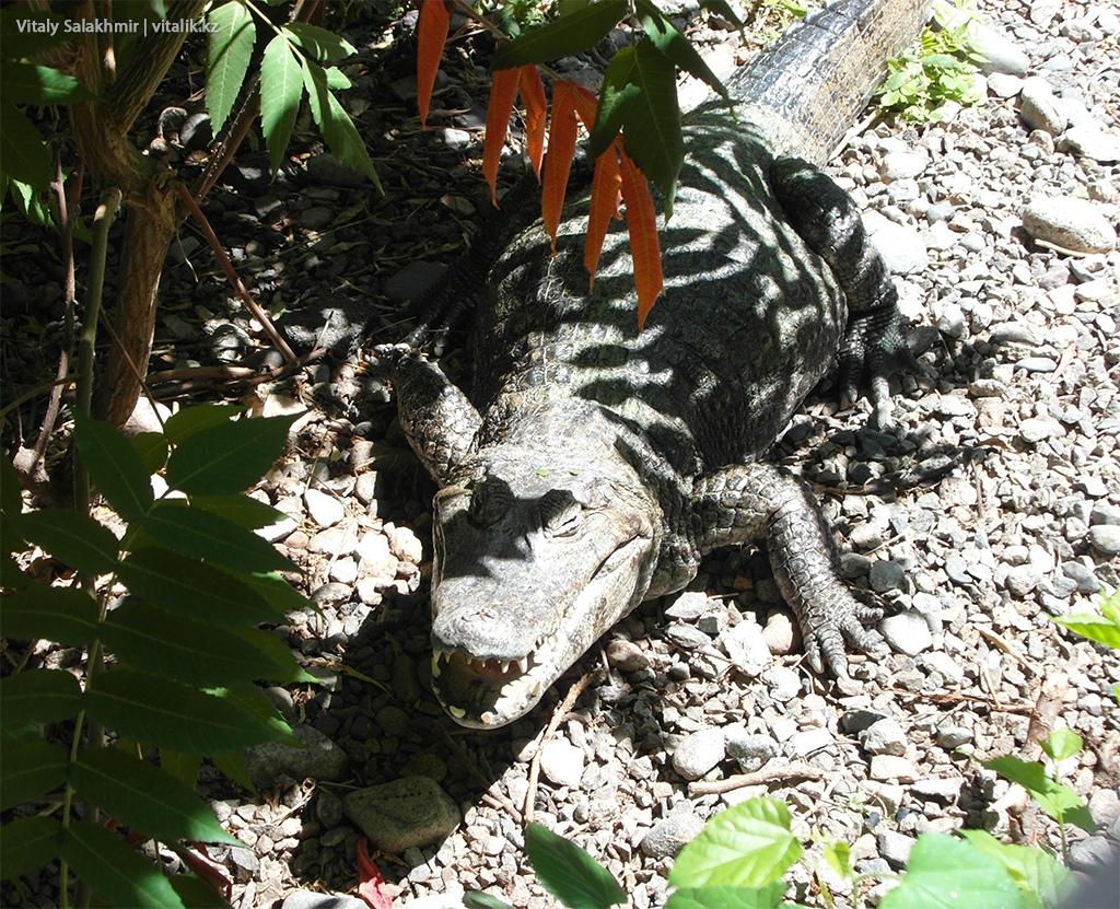 Крокодил в зоопарке Алматы 2018