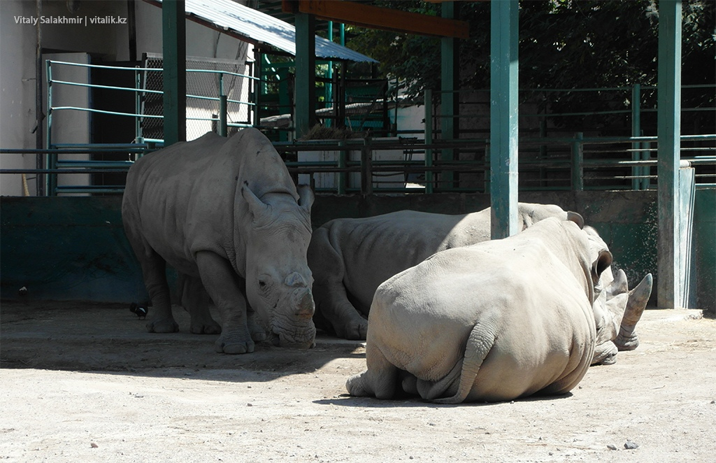 Носороги, зоопарк Алматы 2018