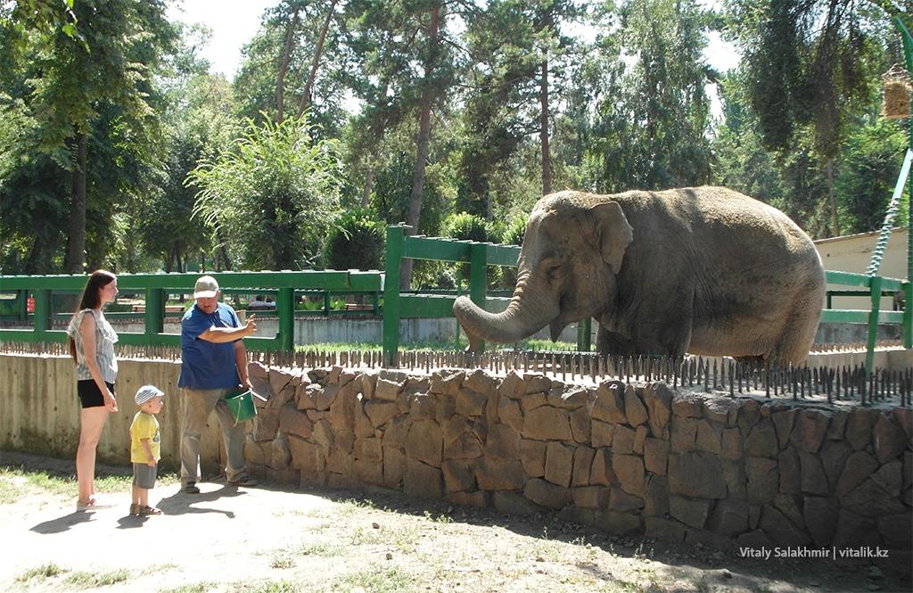 Кормление слона в зоопарке Алматы 2018