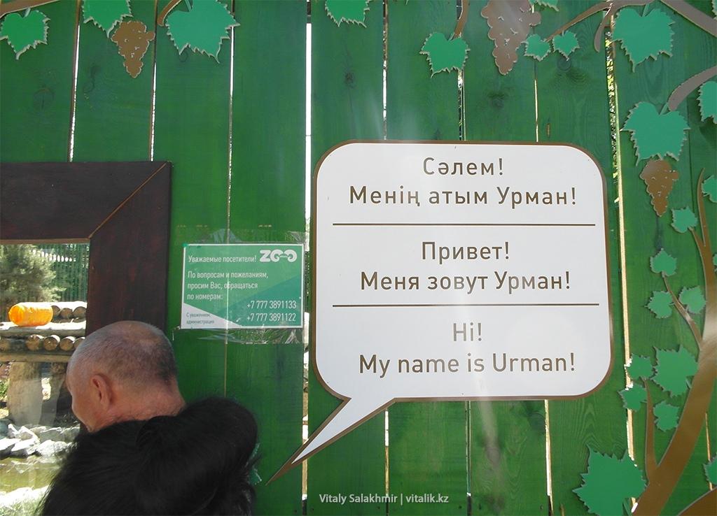 Табличка на клетке, Тигр Урман, зоопарк Алматы 2018