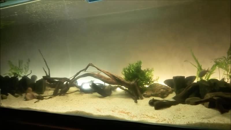про то как я купила новый аквариум на 400 л