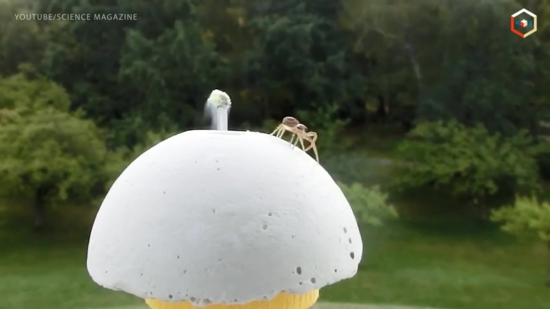 Специально для арахнофобов пауки летают и при том очень умело!