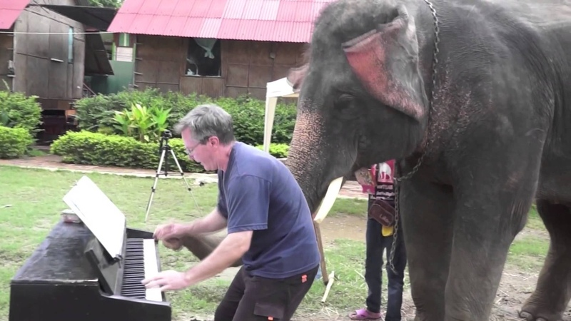 12 Bar Blues - Piano Duet with Peter the Elephant - Thailand