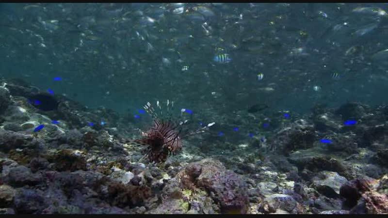 BBC: Океаны (8 серий). Тайны Тихого Океана (6 серий).