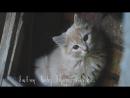 BlagoSGS. Социальная реклама о бездомных животных. Они не виноваты!