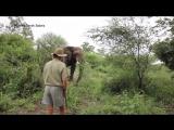 Парень останавливает слона, который мчится на него
