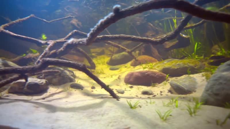 Seim River coast, Tetkino site, Chervona Sloboda, Russia, 4800 L