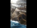 Владивосток ❤ счастье русалочки