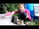 Мимими VLOG: няшность этого видео зашкаливает =)) Нелнаро и котята
