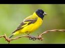 Какая птица покровительствует Вам в зависимости от месяца Вашего рождения