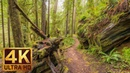 4K Forest Scenery with Relaxing Music Hatton Trail Redwood National and State Parks Trailer