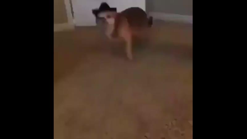 купил пес шляпу а она ему как раз