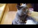 Говорящие коты! Лучшая подборка №2