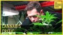 Cannabis Critic 60 Second Docs
