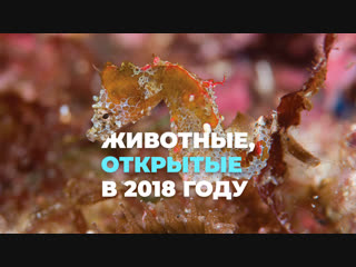 Животные, открытые в 2018 году