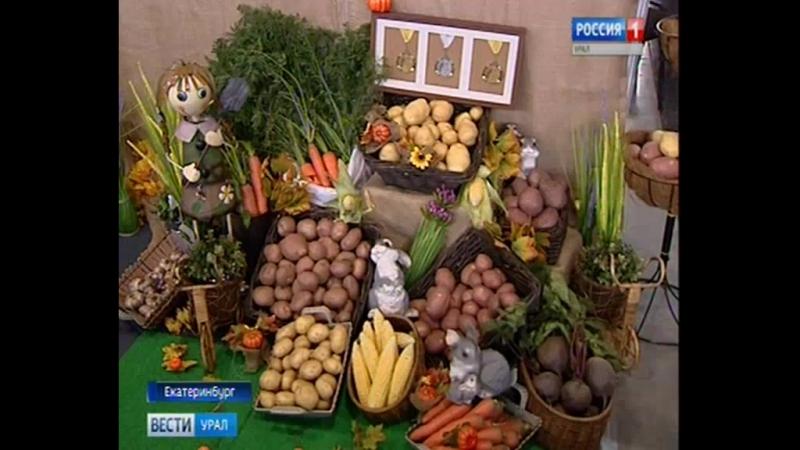 В Екатеринбурге открылся Агрофорум сельхозпродукцию представили со всей страны