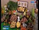 В Екатеринбурге открылся Агрофорум: сельхозпродукцию представили со всей страны
