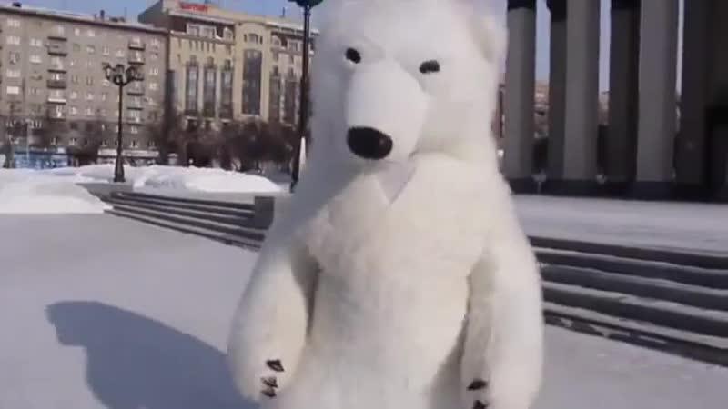 танцы белого медведя