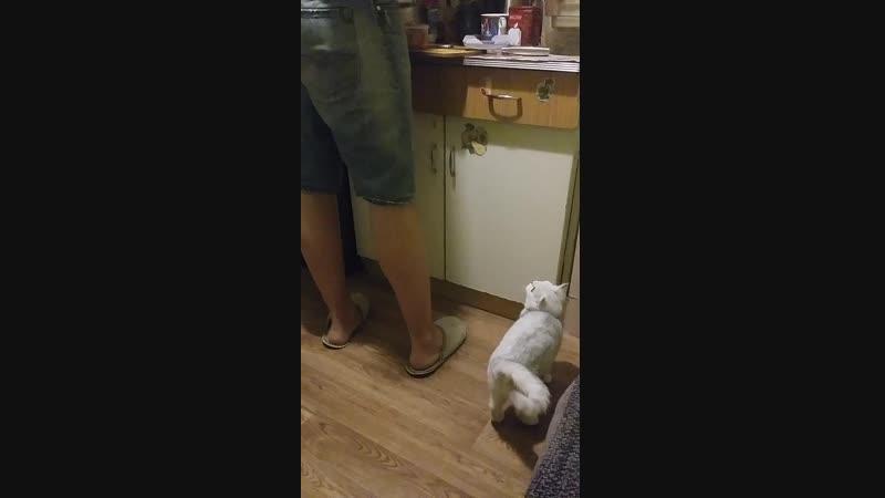 Просит еду на кухне
