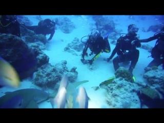 рыбный суп на Мальдивах