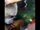 Собакен и рыбки!
