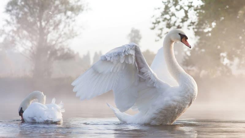 Гадкий утёнок или прекрасный лебедь