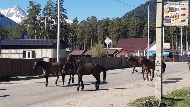 Архыз. Подготовка к конной прогулке. Тур выходного дня.