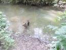 Ресси купается в Ноксе