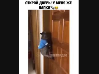 Кот просит открыть дверь.