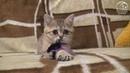Котик-мнушка Лёня Безухов, 2,5 месяца