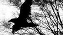 Чёрный Ворон Песня Народная